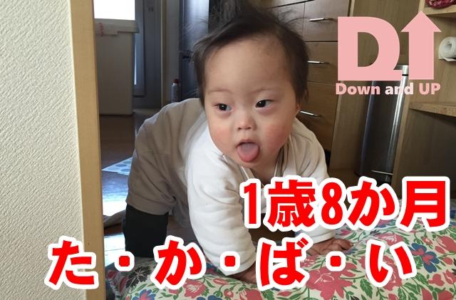 高這い,1歳8か月,ダウン症,ブログ