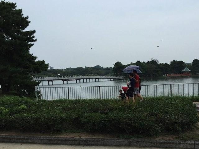 朝,散歩,朝活,大濠公園,ダウン症,ブログ,ブランコ