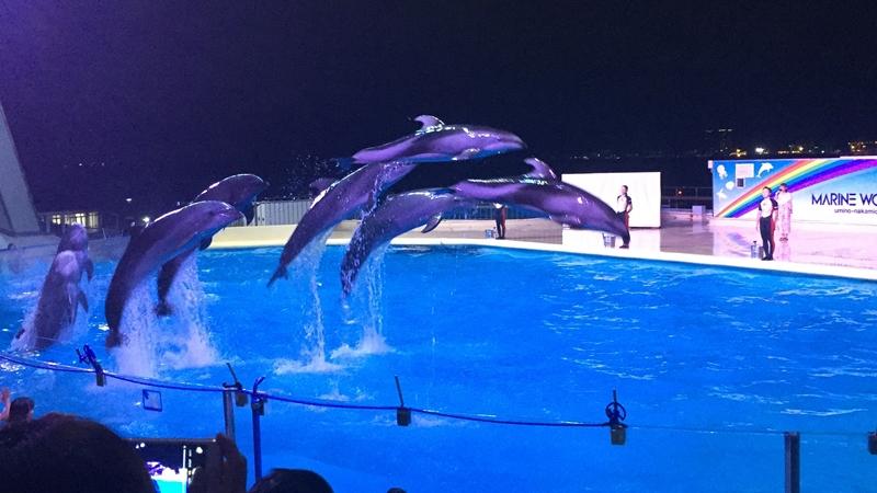 夜の水族館 イルカ