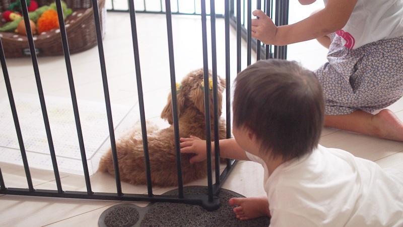 犬を初めて触る